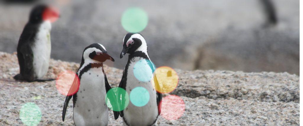 penguins on a christmas postcard